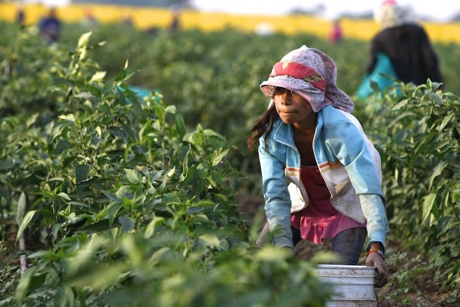 1744293_fg_0605_mexico_farm_labor_children_03_dpb