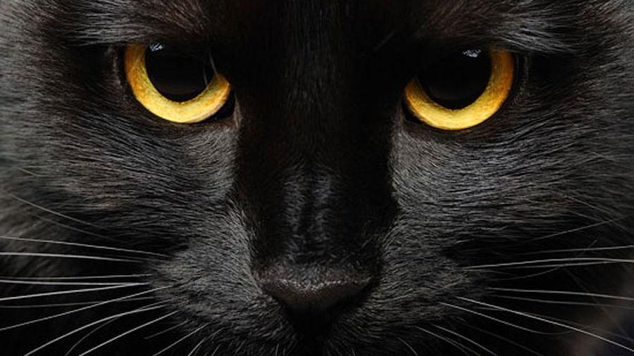 es halloween cuiden de los sat nicos a su gato negro. Black Bedroom Furniture Sets. Home Design Ideas